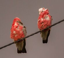Birds on a Wire by Deborah McGrath