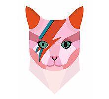Bowie Cat Photographic Print