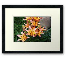 Lily Abundance Framed Print