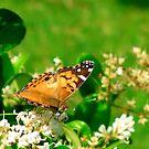 Golden Butterfly by Sandra Moore