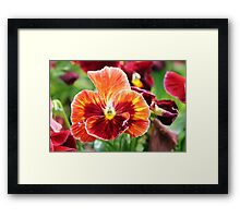 Flourishing Flowers Framed Print