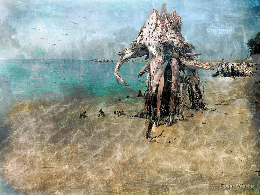 Rising Tides and Ebbing Waters by Susan Werby