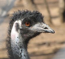 Emu - Nature Park Bute by Tracy-Anne Cope