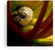 Tiny Snail Inside A Lily Canvas Print