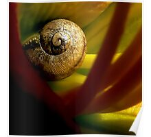 Tiny Snail Inside A Lily Poster