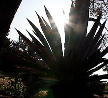 Sunlight through Agave Leaves by Morgan Wade