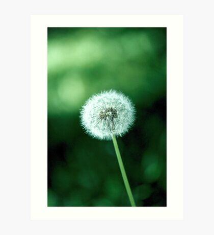 ~ lonely dandelion ~ Art Print