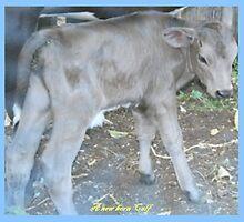 """ A new Born Calf"" by Norma-jean Morrison"