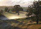 'Sunlight & Mist' by debsphotos