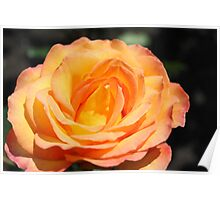 Beautiful yellow rose flower picture. Floral photo art. Poster
