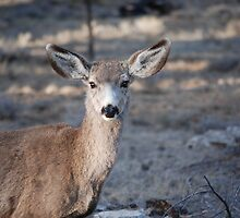 My Deer! by Cupertino