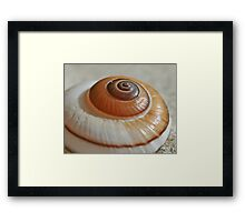 She sells Snail Shells by the Sea Shore  Framed Print