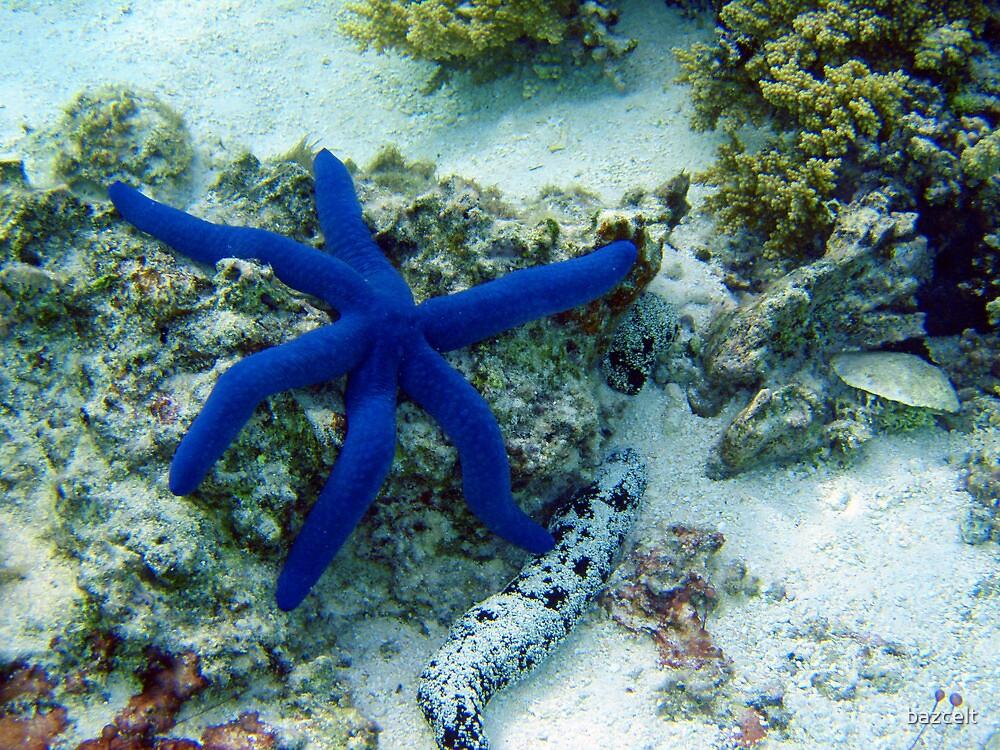 Blue Star by bazcelt