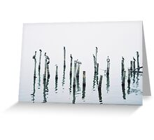 Water Birds early in the morning Greeting Card