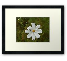 Dainty but strong Framed Print