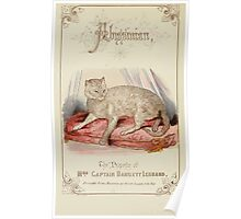 Cats Their Points and Characteristics Gordon Stables 1877 0298 Abissinian Poster