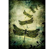 Fly, Fly Away! Photographic Print