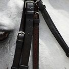 White Horse by photoloi