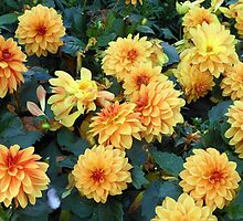 Rusty Dahlias - Out in the rain too long! by BlueMoonRose
