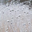 Fairy Wands for the Ice Queen... by LindaR