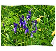 Bluebells #2  (Spring - May) Poster