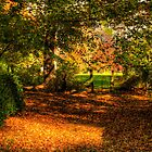 A Walk Amongst The Leaves - Nooroo, Mount Wilson - The HDR Experience by Philip Johnson