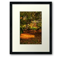 A Walk Amongst The Leaves - Nooroo, Mount Wilson - The HDR Experience Framed Print
