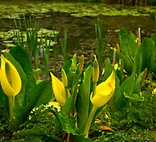 By The Pond by Trevor Kersley