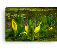 By The Pond Canvas Print