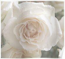 Vanilla Rose Poster