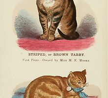 Cats Their Points and Characteristics Gordon Stables 1877 0108 Brown Tabby, Red Tabby by wetdryvac
