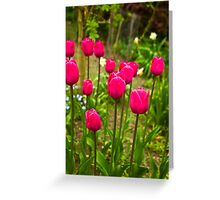 Tulips (Spring-Early May) Greeting Card