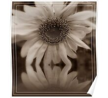 Reflection Of A Sunflower Poster