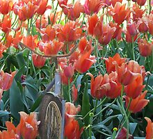 Oh No Look Whats In The Tulip Bed by Linda Miller Gesualdo