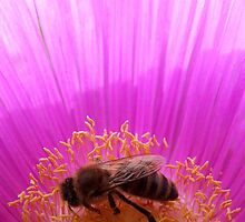 Busy Bee by emele