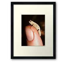 Dwarf Chameleon Framed Print