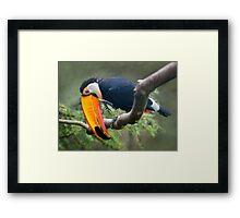 My Beautiful Beak Framed Print