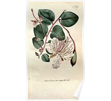 The Botanical magazine, or, Flower garden displayed by William Curtis V9 V10 1795 1796 0008 Capparis Spinosa, The Caper Shrub Poster