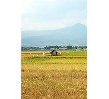 rice paddies Photographic Print