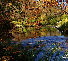 Northwest Pennsylvania Creek in Autumn by Elliot MacDonald