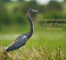 Nature Photography Challenge Group Banner by Karen  Moore