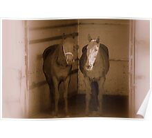 Equine Friends Poster