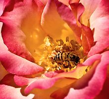 Busy Bee and the Rose by Angela Pritchard