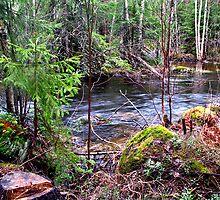 Kyykoski rapids by daive