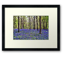 Knee Deep In Bluebells! Framed Print