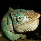 Amber Mountain Chameleon by Robbie Labanowski