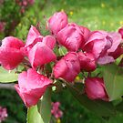 Heavenly Hawthorn Blossom by Sandra Cockayne