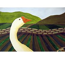 310 - THE LONE GOOSE - DAVE EDWARDS - ACRYLIC - 2010 Photographic Print