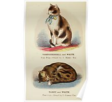 Cats Their Points and Characteristics Gordon Stables 1877 0074 Tortoiseshell and White, Tabby and White Poster
