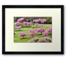Blossom On The Green Framed Print